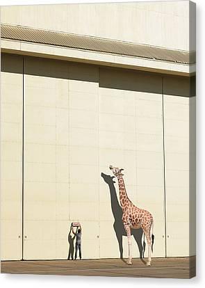Giraffe Canvas Print - Curious Giraffe by Richard Newstead