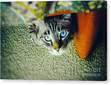 Canvas Print featuring the photograph Curious Kitty by Silvia Ganora