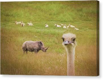 Ostrich Canvas Print - Curious Ostrich And White Rhino by Tom Mc Nemar