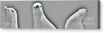 Curious Seagull Canvas Print by Geoff Childs
