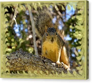 Curious Squirrel 2 Canvas Print by Kae Cheatham