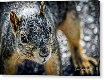 Canvas Print featuring the photograph Curious Squirrel by Joann Copeland-Paul