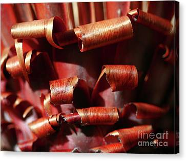 Canvas Print featuring the photograph Curl Up And Die by Stephen Mitchell