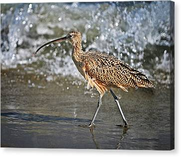 Curlew And Tides Canvas Print by William Lee