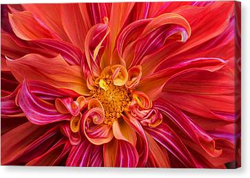 Curls And Curves Canvas Print by Mary Jo Allen