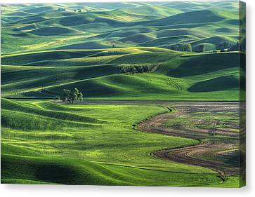 Curves Of The Palouse Canvas Print by Mark Kiver