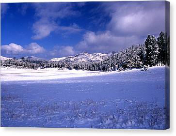 Custer State Park Canvas Print by Barry Shaffer