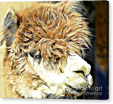 Soft And Shaggy Canvas Print by Kathy M Krause