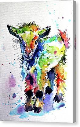 Cute Baby Goat Canvas Print by Kovacs Anna Brigitta