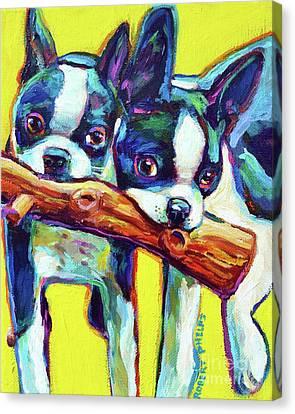 Cute Boston Terriers Canvas Print by Robert Phelps