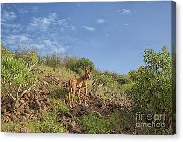 Cute Brown Dog On Rocks Canvas Print by Patricia Hofmeester