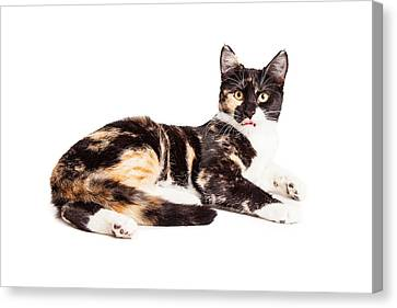 Cute Calico Kiten Sticking Tongue Out Canvas Print by Susan Schmitz