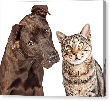 Mutt Canvas Print - Cute Cat And Dog Closeup Photo by Susan Schmitz