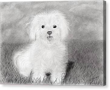 Cute Dog Canvas Print by Selvam Venkatesan