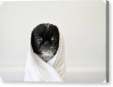 Cute Dog Wrapped Canvas Print by Emma Mayfield Photography