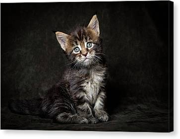 Cute Face Canvas Print by Robert Sijka