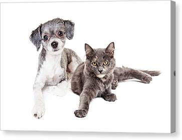 Cute Grey Kitten And Puppy Laying Together Canvas Print by Susan Schmitz