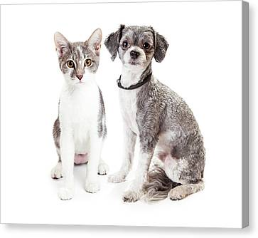 Cute Grey Kitten And Puppy Sitting Together Canvas Print by Susan Schmitz
