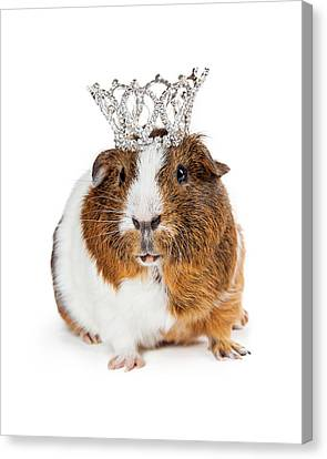 Cute Guinea Pig Wearing Tiara Canvas Print