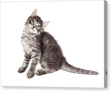 Cute Kitten Tilting Head Over White Canvas Print