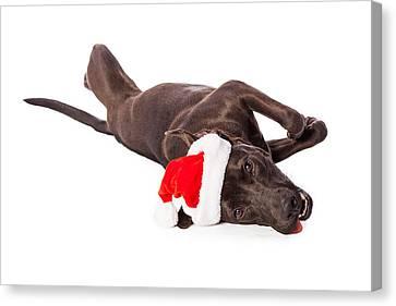 Santa Claus Canvas Print - Cute Labrador Dog Laying Wearing Santa Hat  by Susan Schmitz