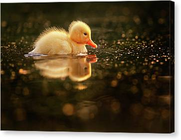 Cute Overload Series - Baby Duck Canvas Print by Roeselien Raimond