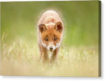 Cute Overload Series - Baby Fox Exploring The World Canvas Print