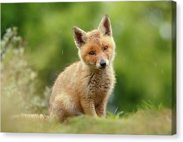 Cute Overload Series - Best Baby Fox Ever Canvas Print by Roeselien Raimond
