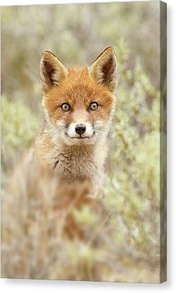 Cute Overload Series - Happy Baby Fox Canvas Print by Roeselien Raimond