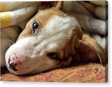 Cute Puppy Cuddles Canvas Print by Justin Mountain