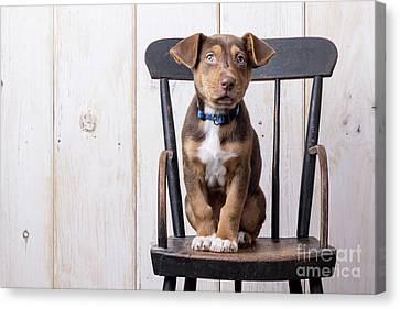 Cute Puppy Dog On A High Chair Canvas Print