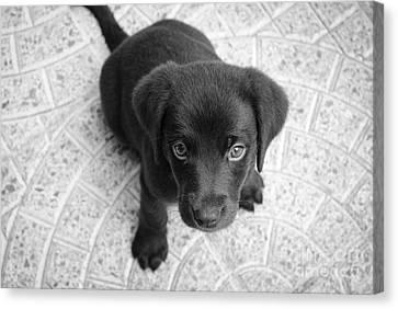 Cute Puppy Dog Canvas Print
