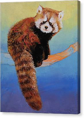 Cute Red Panda Canvas Print by Michael Creese