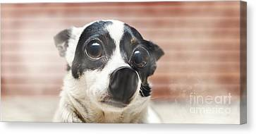 Cute Surprised Dog Pressed Up Against Glass Window Canvas Print
