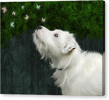Canvas Print featuring the photograph Cute White Jack Russel Dog by Ethiriel  Photography
