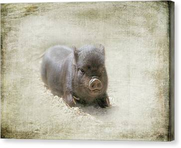 Cuteness Incarnate Canvas Print by Marilyn Wilson