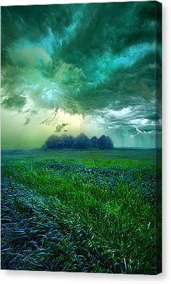Cutting Loose Canvas Print by Phil Koch