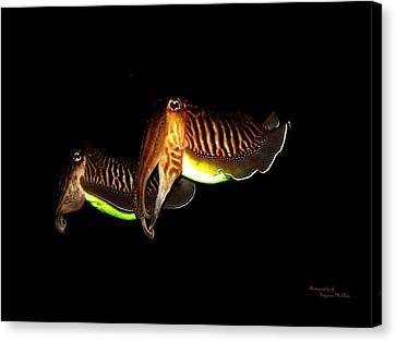 Cuttlefish Canvas Print by Suzanne  McClain