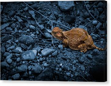 Canvas Print featuring the digital art Cyanotype Horned Toad by Bartz Johnson