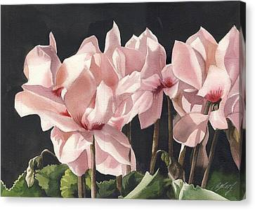 Cyclamen In Pink Canvas Print by Alfred Ng