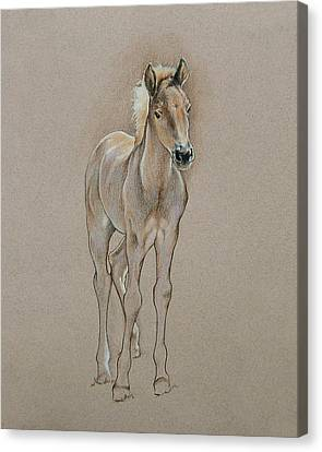 Cyndee's Foal Canvas Print by Cindy Davis
