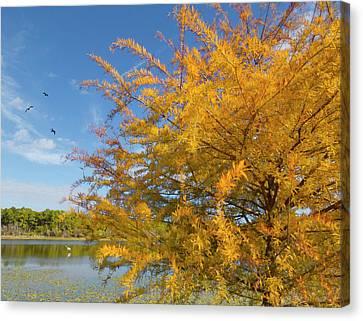 Cypress At Ollie's Pond - Port Charlotte, Florida Canvas Print