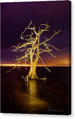 Cypress At Sunset 2860 Canvas Print