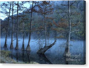 Canvas Print featuring the photograph Cypress Awakening by Tamyra Ayles