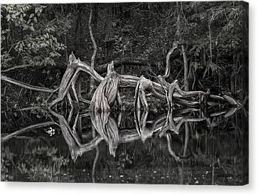 Canvas Print featuring the photograph Cypress Design by Steven Sparks