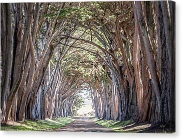 Cypress Embrace Canvas Print by Everet Regal
