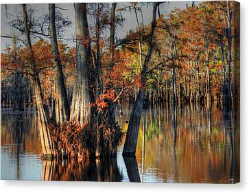 Cypress Group  Canvas Print by Ester  Rogers