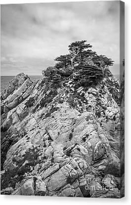 Cypress Island Canvas Print by Alexander Kunz