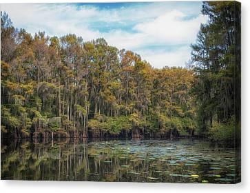 Cypress Jungle Canvas Print