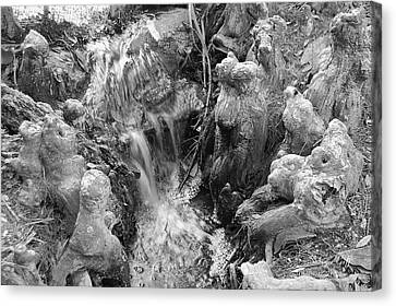 Cypress Knees II Canvas Print by Suzanne Gaff